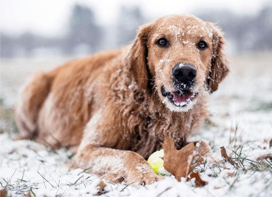 Отравление реагентами собак и кошек