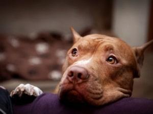 Американские породы собак