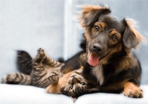 Сахарный диабет у кошек и собак