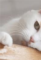 Эвтаназия кошек