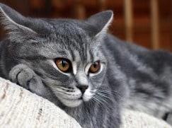 Заболевания молочных желез у кошек и собак