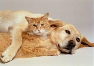Затрудненное глотание у собак и кошек