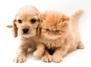 Папулы и пустулы у собак и кошек