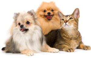 Синдром Кушинга у собак и кошек