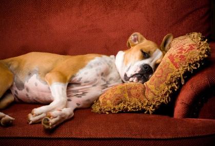 """Эндометрит у собак - симптомы, диагностика, лечение - Сеть Ветеринарных Центров """"МЕДВЕТ"""""""