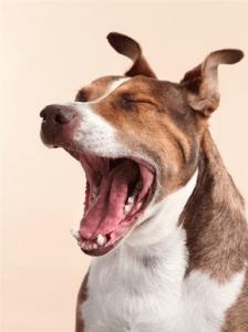 Собака воет_2