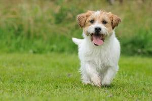 Пиодерма у собак