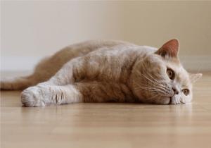 Судороги у кошки