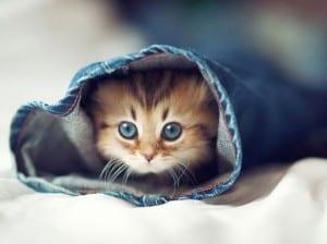 Понос у котят