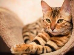 эндометрит кошек