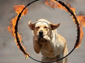 Ожоги у собак