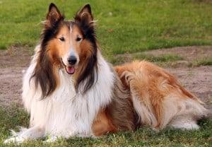 Пиелонефрит у собак