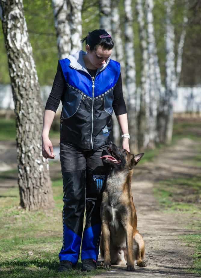 Новая услуга - профессиональная дрессировка собак