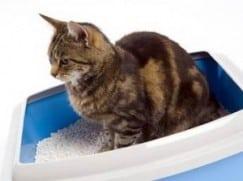 Наполнители для кошачьего туалета