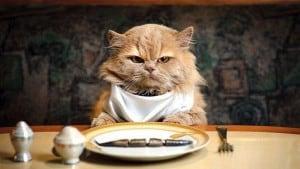 Отсутствие аппетита у кошек