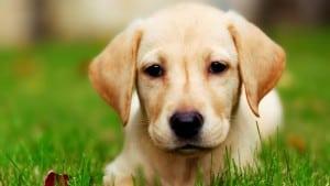 Дисбактериоз у собак