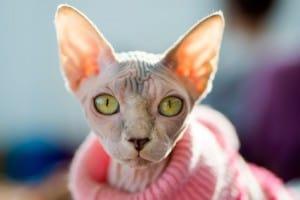 Перелом шейки бедра у кошки