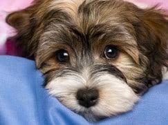 Удаление матки у собаки