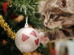 cat-vs-christmas-tree