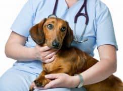 Гастроскопия собаке